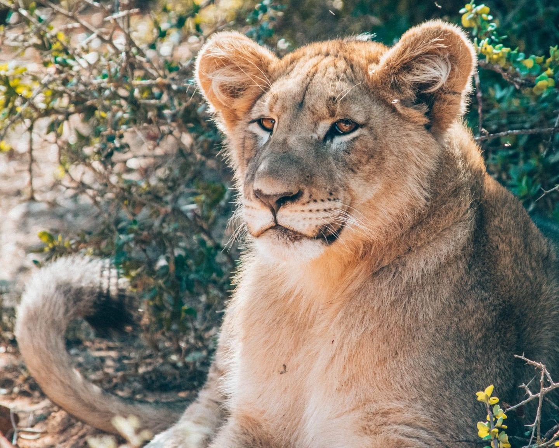 Reasons to go on safari