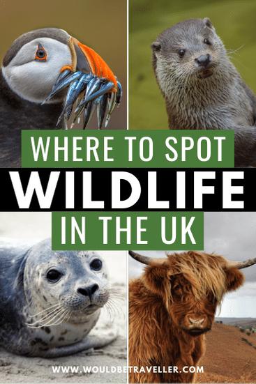 British wildlife in the UK pin