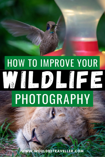 How to improve your wildlife photography pin