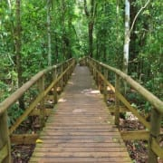Boardwalk in Manuel Antonio National Park - one of the best things to do